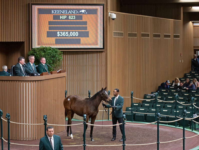 Hip 623 filly by Mastery from Dowry and Royal Oak<br /> Keeneland January Horses of all ages sales on<br /> Jan. 14, 2020 Keeneland in Lexington, KY.