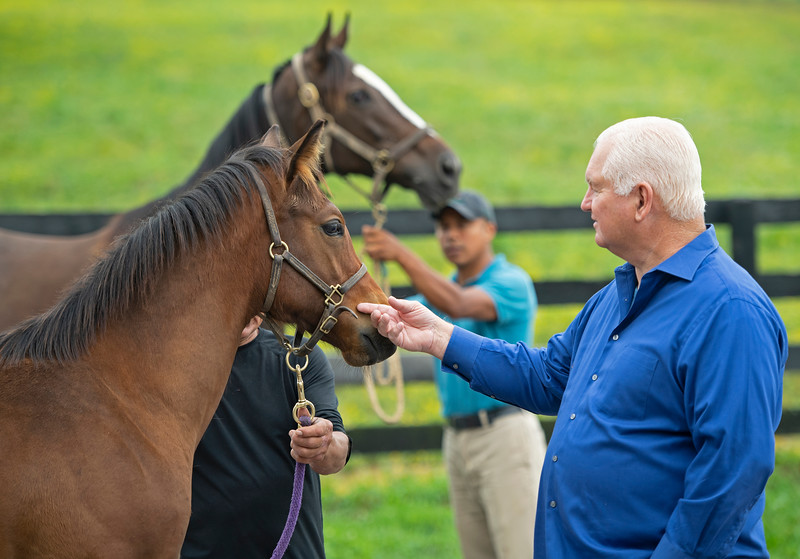 Caption: Searing petting Uncle Mo foal from Lady Tapit (background).<br /> Lee and Susan Searing look over their bloodstock (mares, foals, yearlings) at Springhouse Farm near Nicholasville, Ky., on June 22, 2020 Springhouse Farm in Nicholasville, KY.