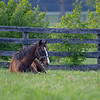 Caption: yearling relaxes in field<br /> Mill Ridge Farm scenes, near Lexington, Ky.,  on April 15, 2020 Mill Ridge in Lexington, KY.