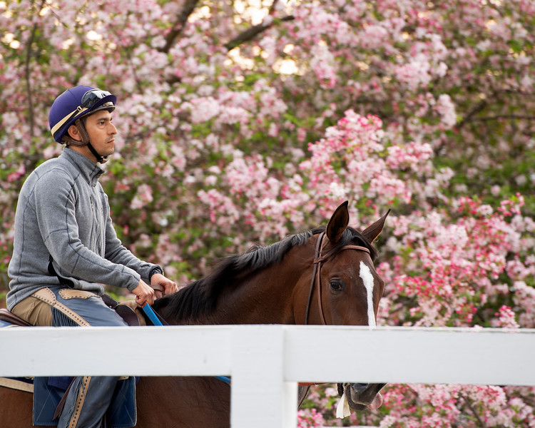 Keeneland morning scenes at Keeneland.<br />  on April 11, 2019 in Lexington, Ky.