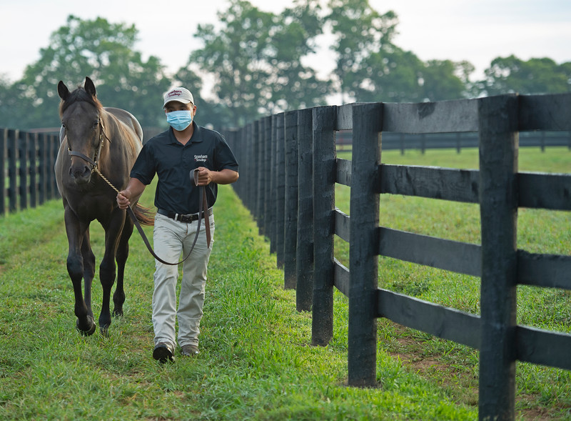 Caption:  Justo Martinez with Distorted Humor colt out of Santa Vindi<br /> Aidan and Leah O'Meara at Stonehaven Steadings near Versailles, Ky. on Aug. 7, 2020 Stonehaven Steadings in Versailles, KY.