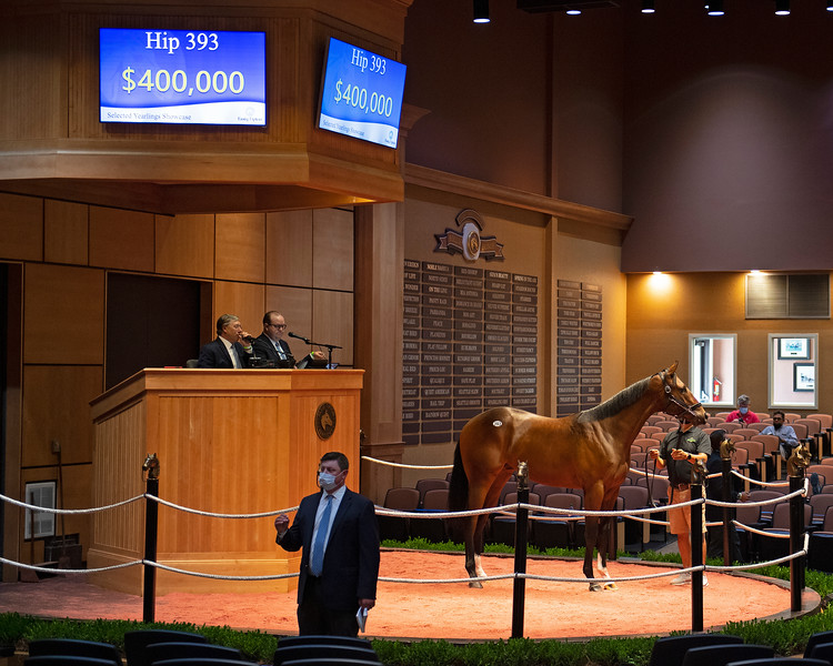 Hip 393 colt by Arrogate out of Succeeding from Hill 'n' Dale<br /> Fasig-Tipton Selected Yearlings Showcase in Lexington, KY on September 10, 2020.