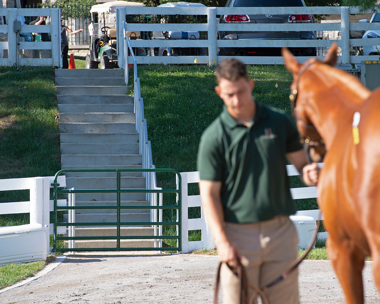 Renovations include new walkways and gates<br /> at the Keeneland September Sale.