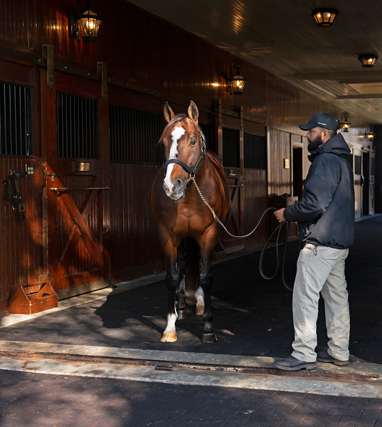 Into Mischief on Nov. 15, 2019 Spendthrift Farm in Lexington, KY.