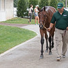 The Runhappy colt consigned as Hip 551 at Airdrie Stud's consignment to the Keeneland September Sale.