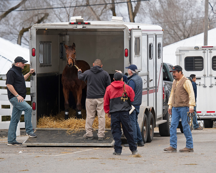 Arrival and unloading of Hip 438, a Master colt from Shannon Faith and Blandford Stud. Scenes during the Keeneland January sales on Jan. 11, 2020 Keeneland in Lexington, KY.