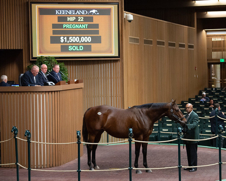 Hip 22 Mei Ling at Hill n Dale<br /> at  Nov. 6, 2019 Keeneland in Lexington, KY.