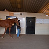 Country House held by Emilee Ingram is examined at a walk by Scott Morrison DVM at Blackwood Stables on<br /> Feb. 28, 2020 Blackwood Stables in Versailles, KY.