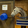 Caption:  program horse Monacle in stall<br /> BCTC equine school and NARA in Lexington, Ky., and Thoroughbred Training Center, on July 6, 2020 BCTC in Lexington, KY.