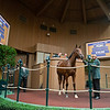 Hip 2995<br /> at Keeneland September sale.