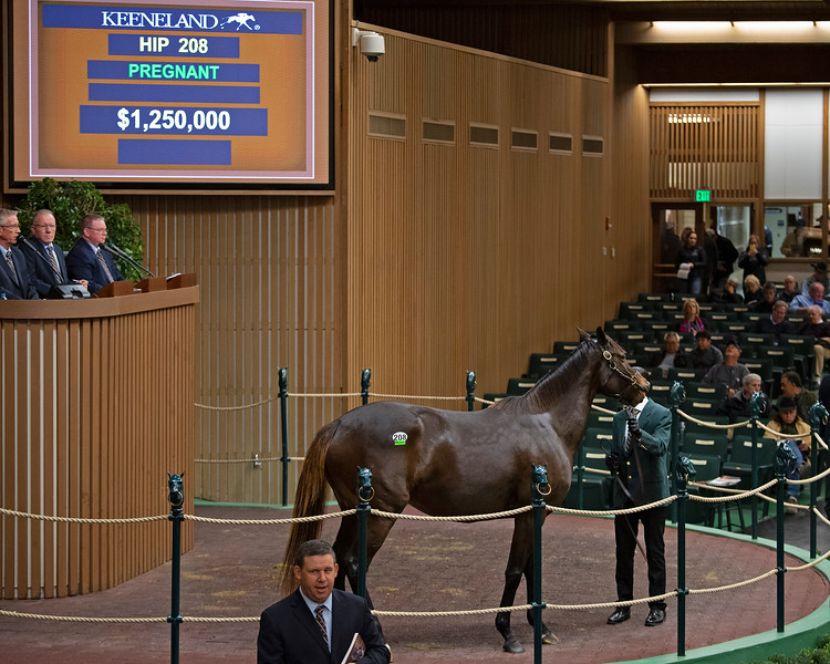 HIp 208 Conquest<br /> at  Nov. 6, 2019 Keeneland in Lexington, KY.