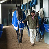 Caption: Maxfield walks the shedrow<br /> Keeneland scenes and horses on April 25, 2020 Keeneland in Lexington, KY.