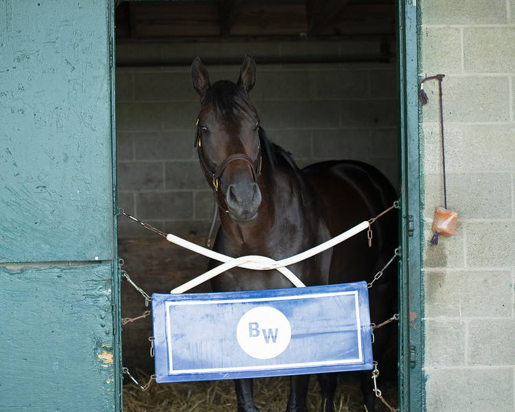 Caption: Maxfield in his stall at Brendan Walsh barn.<br /> Keeneland scenes and horses on April 25, 2020 Keeneland in Lexington, KY.