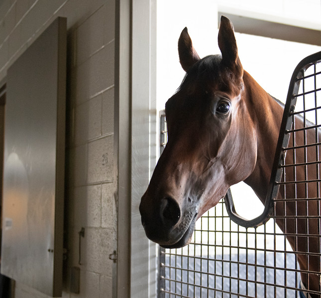 Magnetic Charm<br /> at Woodbine.