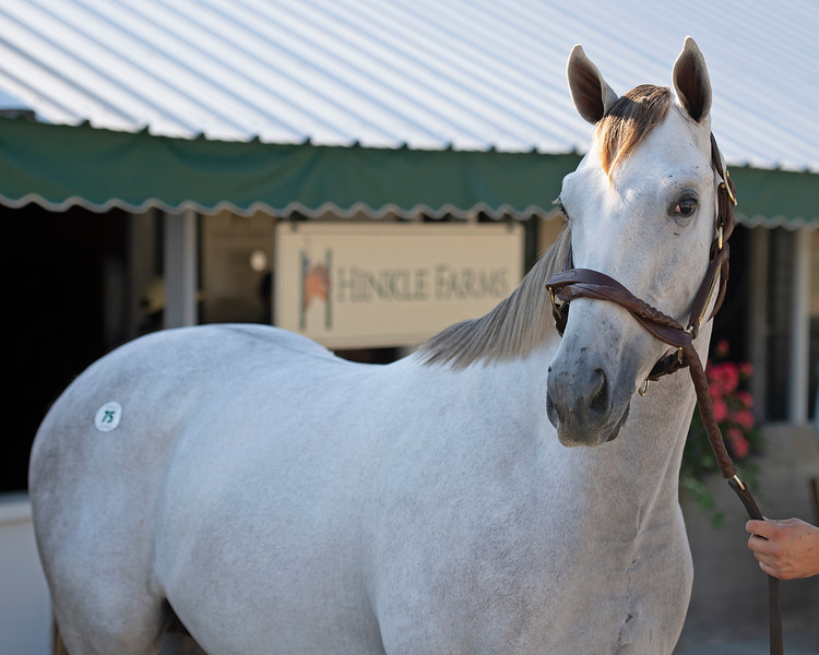 Hip 75 colt by Tapit out of Seeking Gabrielle from Hinkle Farms consignment<br /> at the Keeneland September Sale.