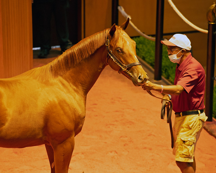 Hip 174 colt Classic Empire out of Just Parker at Scott Mallory<br /> Fasig-Tipton Selected Yearlings Showcase in Lexington, KY on September 9, 2020.