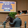 Hip 3147<br /> at Keeneland September sale.