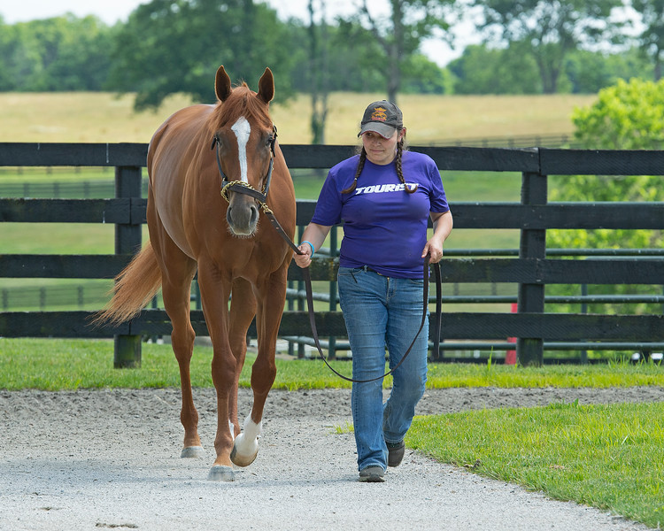 Caption: <br /> British Idiom at WinStar Farm near Versailles, Ky., on June 16, 2020 WinStar Farm in Versailles, KY.