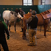 Caption: 8:15 am Liam's Map getting ready to breed Cookie Cutter, right.  Daily Life on Billy Sellers, Lane's End Farm stallion manager who started working for the farm in 1982 and who has been their only stallion manager since 1985 when the farm acquired their first stallions, photographed on<br /> March 3, 2020 Lane's End Farm in Versailles, KY.