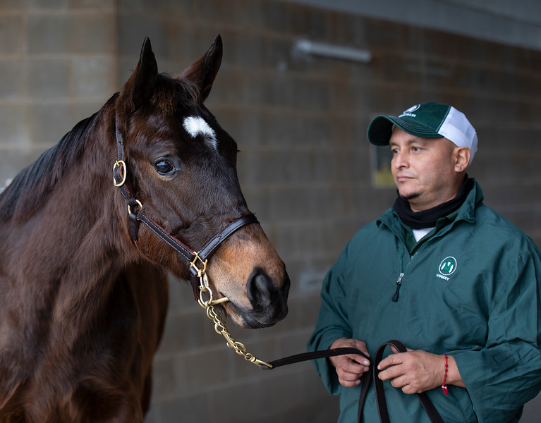 Hip 326 at Vinery. Scenes during the Keeneland January sales on Jan. 11, 2020 Keeneland in Lexington, KY.