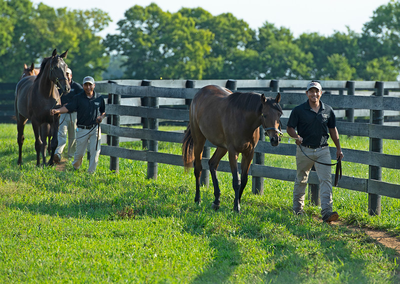 Caption:  in order, front to back, fillies by Gun Runner from High Authority, American Pharoah from Easy Living, and Malibu Moon from Grand Traverse<br /> Aidan and Leah O'Meara at Stonehaven Steadings near Versailles, Ky. on Aug. 7, 2020 Stonehaven Steadings in Versailles, KY.