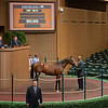 Hip 3670<br /> at the Keeneland September sale