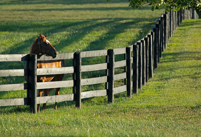 Caption: mare in field<br /> Chuck and Lyra Miller at Rosecrest Farm near Paris, Ky. on July 10, 2020 Rosecrest in Paris, KY.
