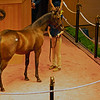 Hip 248 filly by War Front out of Miss Chatelaine from Brookdale Sales<br /> Fasig-Tipton Selected Yearlings Showcase in Lexington, KY on September 9, 2020.