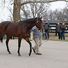 Omaha Beach parades for media, breeders and fans on<br /> Jan. 28, 2020 Spendthrift Farm in Lexington, KY.