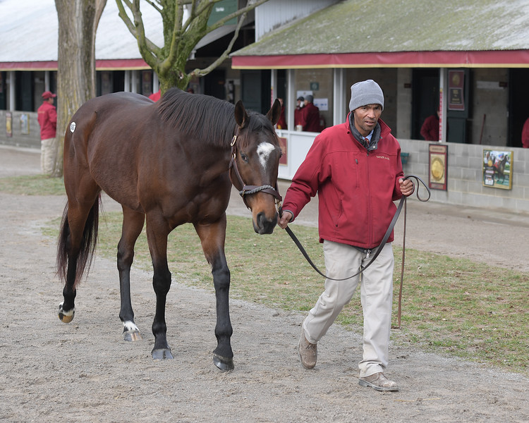 Hip 887 Supercommittee <br /> Keeneland January Horses of all ages sales on<br /> Jan. 14, 2020 Keeneland in Lexington, KY.