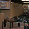 The War Front filly consigned as Hip 351 at Gainesway's consignment to the Keeneland September Sale
