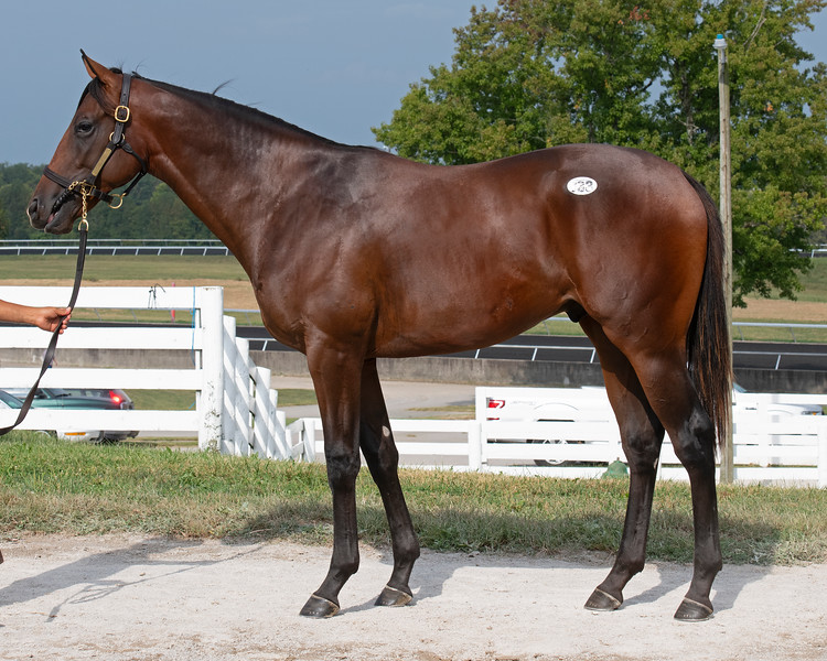 The Flintshire colt consigned as Hip 733 at the Keeneland September Sale