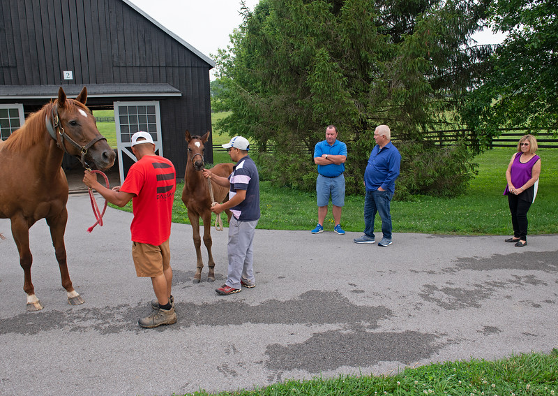 Caption: (L-R): Antiquity with her 2020 ?? foal, Springhouse farm manager Dermot Joyce, Lee Searing, Susan Searing<br /> Lee and Susan Searing look over their bloodstock (mares, foals, yearlings) at Springhouse Farm near Nicholasville, Ky., on June 22, 2020 Springhouse Farm in Nicholasville, KY.
