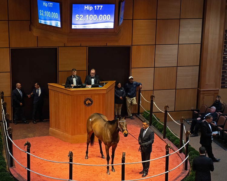 Hip 177 Separationofpowers from Elite<br /> at  Nov. 5, 2019 Fasig-Tipton in Lexington, KY.