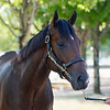 The Medaglia d'Oro colt consigned as Hip 472 at Gainesway's consignment to the Keeneland September Sale