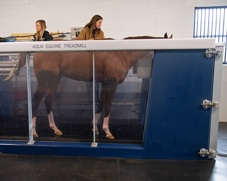 Water emptied. out at end of 15-minute aqua equine treadmill session. Code of Honor at Margaux Farm for some down time before returning to Shug McGaughey and his 4-year-old campaign on<br /> Jan. 23, 2020 Margaux Farm in Midway, KY.