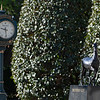 Caption: paddock area with Keeneland Rolex clock and the Breeders' Cup ecorche statue<br /> Behind the Scenes at Keeneland during Covid19 virus and the people, horses, and essentials needed to take care of race horses on April 2, 2020 Keeneland in Lexington, KY.