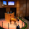 Hip 232 filly by Quality Road out of Marvellous from Hill 'n' Dales Sales Agency<br /> Fasig-Tipton Selected Yearlings Showcase in Lexington, KY on September 9, 2020.