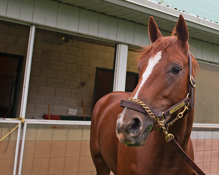 Got Stormy<br /> at Woodbine.