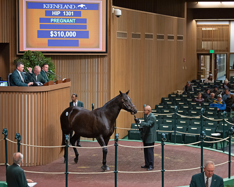 Hip 1301 Ultimate Cause<br /> on  Nov. 9, 2019 Keeneland in Lexington, KY.