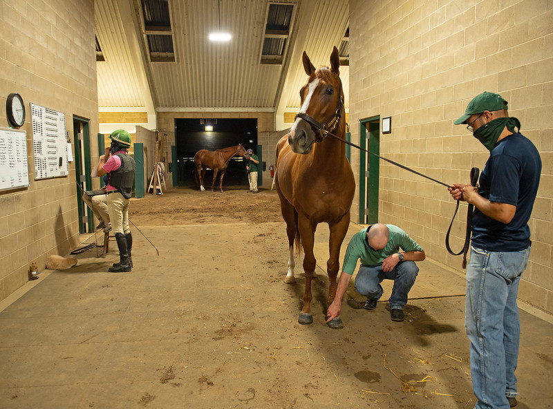 Caption: Checking Ella Jane 's leg searly morning before sets begin. about 5:15 am. Heath looks at all of the breezers, shippers, and horses that got his attention on track the day before. Lots of back and forth from physical exam to set board. <br /> A native of Oklahoma, Heath started working at WinStar Farm on October 10, 2014, and became the farm trainer in October of 2018. Presently he has about 100 horses in training at the WinStar Farm training center, where they have a 7 1/2-furlong main track and 3/4 of a mile undulating turf gallop.<br /> Daily Life series on Destin Heath, farm trainer at WinStar Farm on Aug. 11, 2020 WinStar Farm in Versailles, KY.
