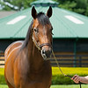 Caption:<br /> Mr. Monomoy at WinStar Farm near Versailles, Ky., on June 16, 2020 WinStar Farm in Versailles, KY.