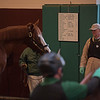 Caption: about 8:09 Catalina Cruiser, left, being watched by Bill and before being bred to mare Industrial Policy on right. Daily Life on Billy Sellers, Lane's End Farm stallion manager who started working for the farm in 1982 and who has been their only stallion manager since 1985 when the farm acquired their first stallions, photographed on<br /> March 3, 2020 Lane's End Farm in Versailles, KY.