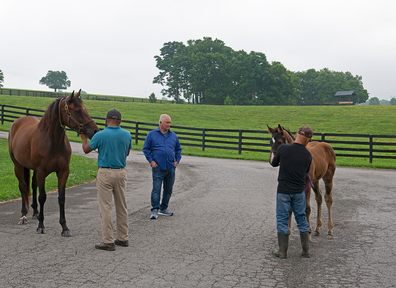 Caption: Lee Searing looking at mare She's a Warrior and her Justify colt.<br /> Lee and Susan Searing look over their bloodstock (mares, foals, yearlings) at Springhouse Farm near Nicholasville, Ky., on June 22, 2020 Springhouse Farm in Nicholasville, KY.