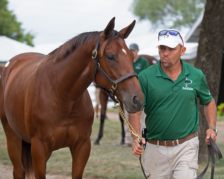 The Runhappy filly consigned as Hip 169 at Penn Sales' consignment to the Keeneland September Sale.