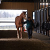 Horse walked after training. Scenes at Blackwood Stables on<br /> Feb. 25, 2020 Blackwood Stables in Versailles, KY.