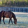 Alternation at<br /> Pin Oak Stud<br /> at  Nov. 8, 2019 Pin Oak Stud in Versailles, KY.