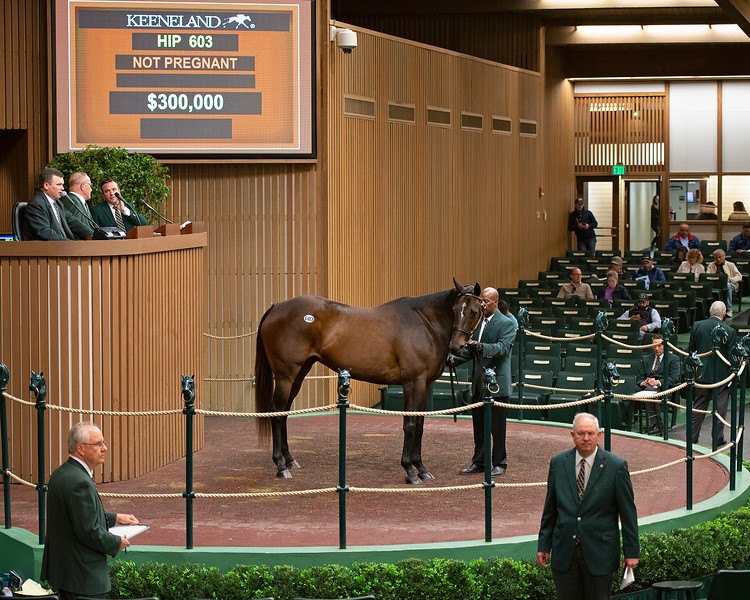 Hip 603 Cry and Catch Me from Warrendale<br /> Keeneland January Horses of all ages sales on<br /> Jan. 14, 2020 Keeneland in Lexington, KY.
