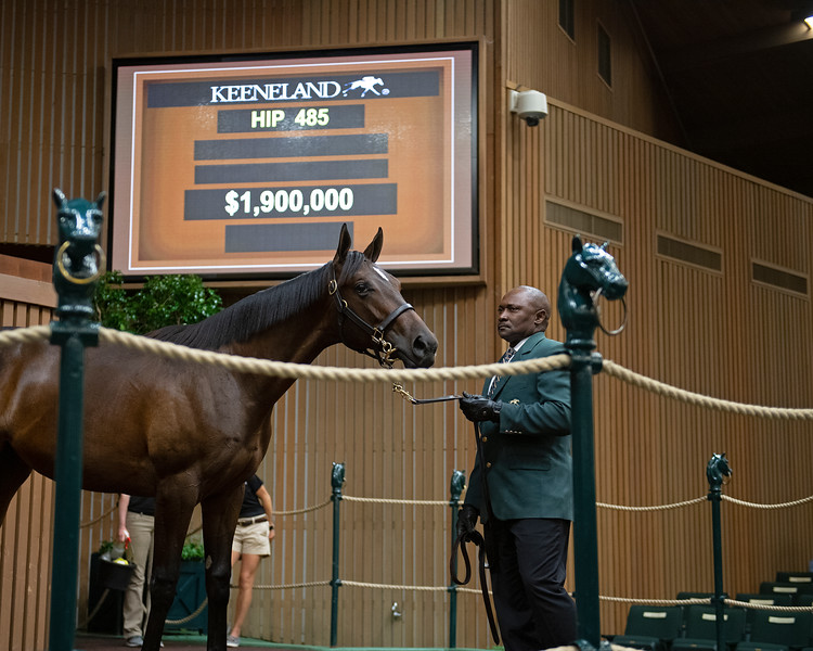 The Empire Maker filly consigned as Hip 485 at the Keeneland September Sale