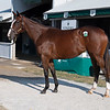 Hip 4581 filly by Karakontie out of Lateen at Vinery Sales<br /> at the Keeneland September sale